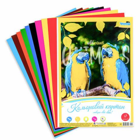 Цветной картон «Дикие попугаи» фото